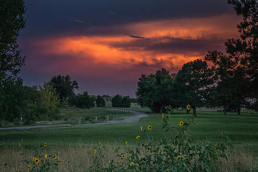 Sunset for sunflowers by Linda Storm