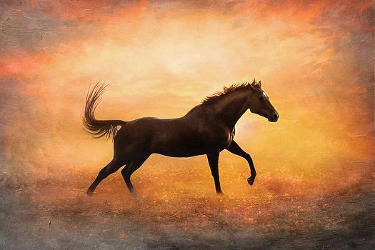 Sunset Gallop by Pamela Hagedoorn