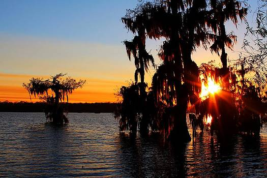 Sunset in the Cypress Trees by Caitlyn Stykowski