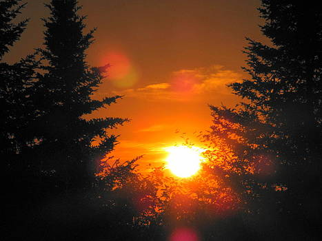 Sunset in Woodland by Sandra Martin