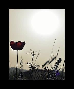 Sunset by Marija Djedovic