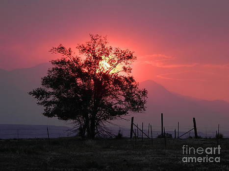 Sunset by Michelle Frizzell-Thompson