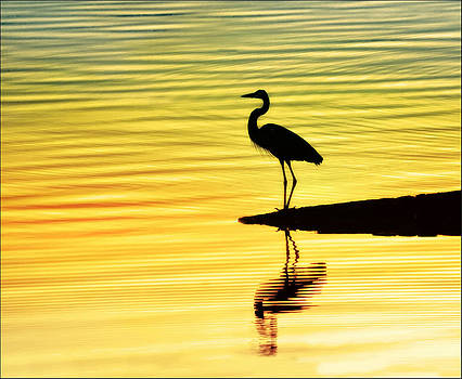 Sunset by Nancie Rowan