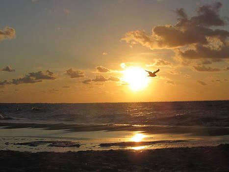 Sunset on the Bay by Vikki Angel