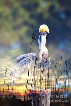 Sunset Pelican by Joan McCool
