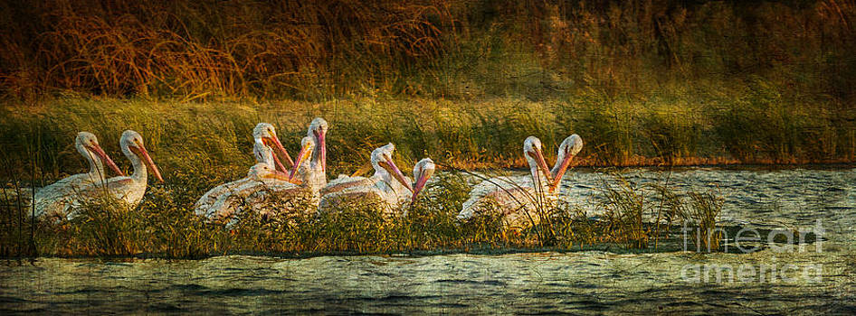 Pelicans Rest by Pam Vick
