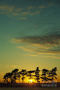 Sunset Pines by Paul Grand