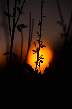 Sunset Silhouette by Danielle Silveira