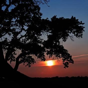 Regina  Williams  - Sunset silhouette