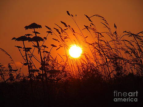 Sunset through Grasses by Elizabeth Debenham