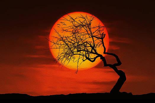 Sunset tree by Bess Hamiti