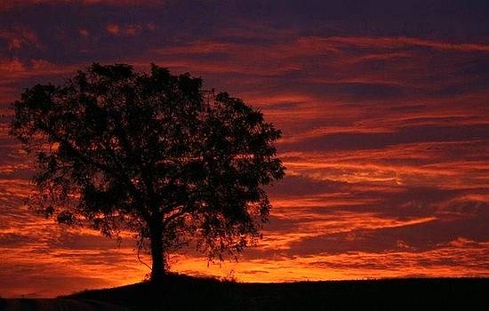 Sunset tree by Doug Hoover