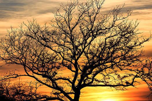 Sunset Tree by John Zocco