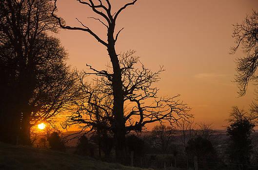 Martina Fagan - Sunset Trees