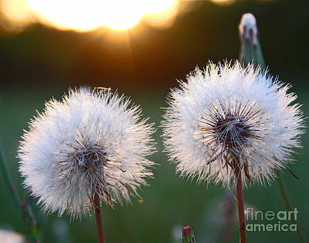 Sunset Wishes by Pam Carter
