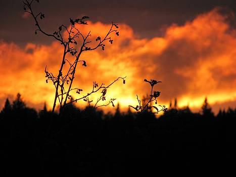 Sunset's Fire by Carolyn Mortensen