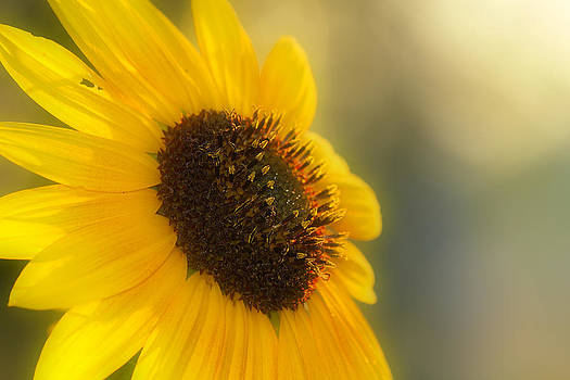 Sunshine by Beckie Fitgerald