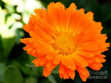 Sunshine Brightness by Eva Thomas