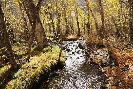 Sunshine Creek by David Winge