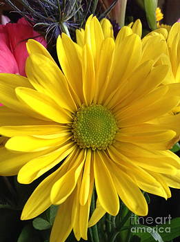 Sunshine Flower by Susan Townsend
