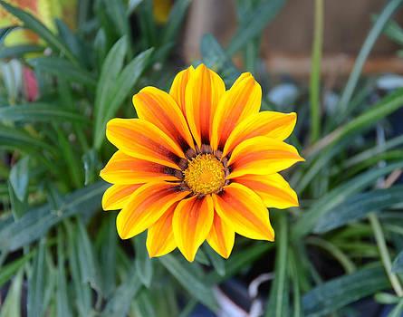 Sunshine by Julie Cameron