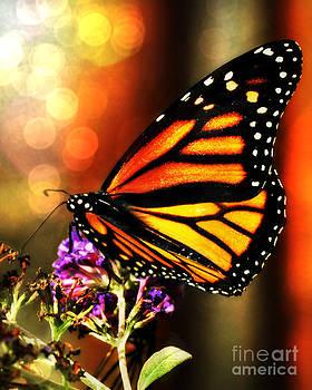 Sunshine Monarch  by Mindy Bench
