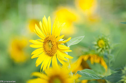 Sunshine on your shoulders by Kornrawiee Miu Miu