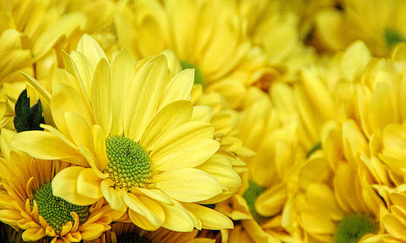 Sunshine by Tammy Espino