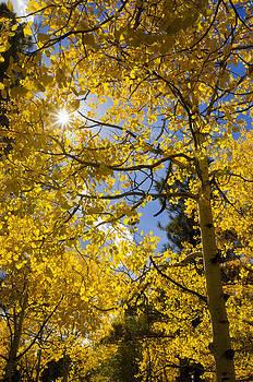 Saija  Lehtonen - Sunshine Through the Aspens