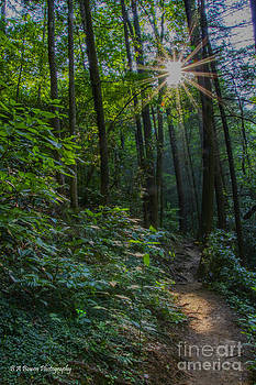 Barbara Bowen - Sunstar along the trail