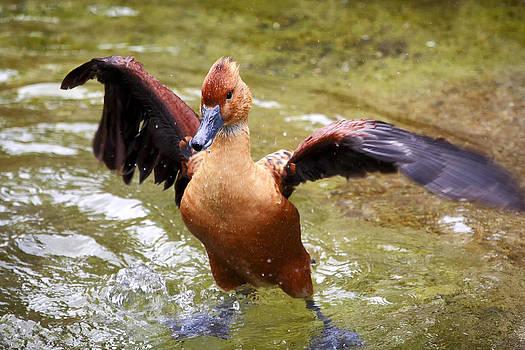 Super Duck by Goyo Ambrosio