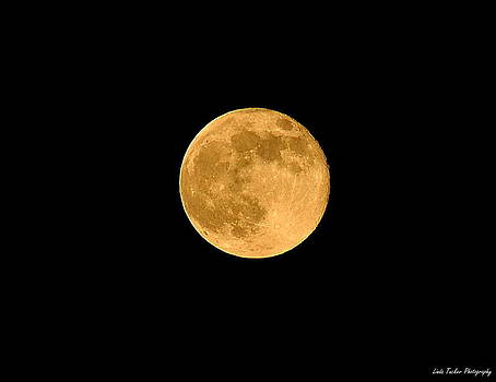 Super Moon 2013 by Linda Tucker
