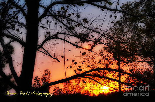 Super Sunset by Sharon Farris