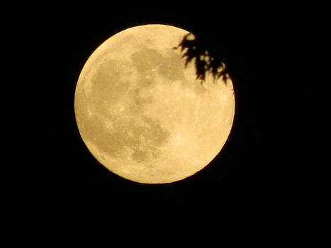 Supermoon by Linda Brown