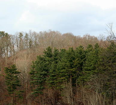 Supply Pond Woods by Stephen Melcher