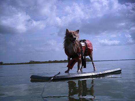 Surfer Dog by Susan Sidorski
