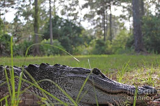 Surprise Alligator Houseguest by Dodie Ulery