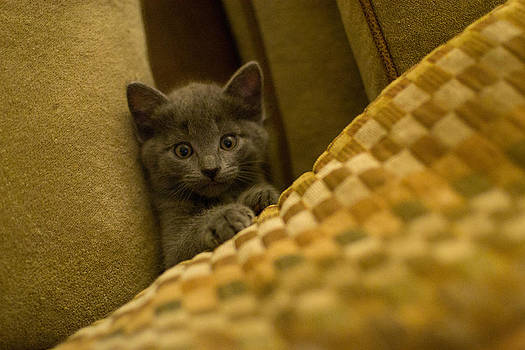Surprised Kitten by Matt Radcliffe
