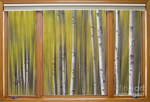 James BO  Insogna - Surreal Forest Dream Classic Wood Window View