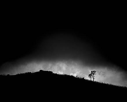 Survivor by Antonio Jorge Nunes