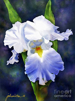 Susan's Blue Iris by Joan A Hamilton