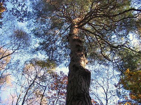 Sussex Wood. by Trevor Britton
