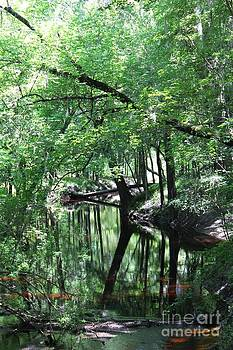 Suwanee River Reflections by Theresa Willingham