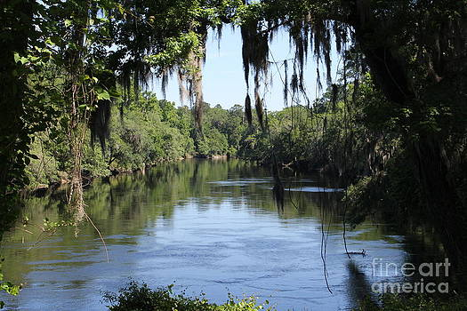 Suwanee River Vista by Theresa Willingham