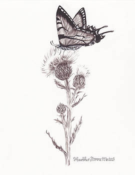 Swallowtail  by Heather Stinnett