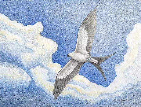 Swallowtail Kite by Wayne Hardee