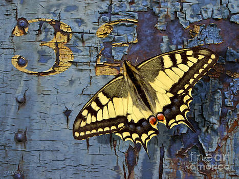 Swallowtail on 32nd by Stephen Shub