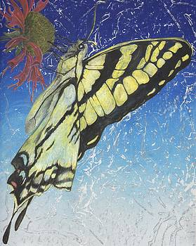Swallowtail by Sara Bell