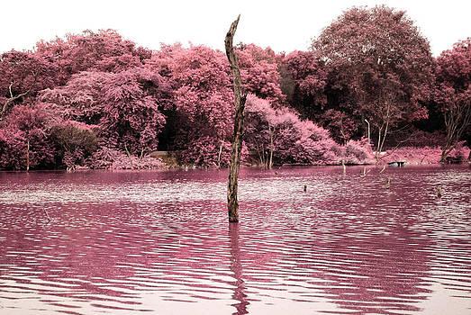 Sumit Mehndiratta - Swamp 2