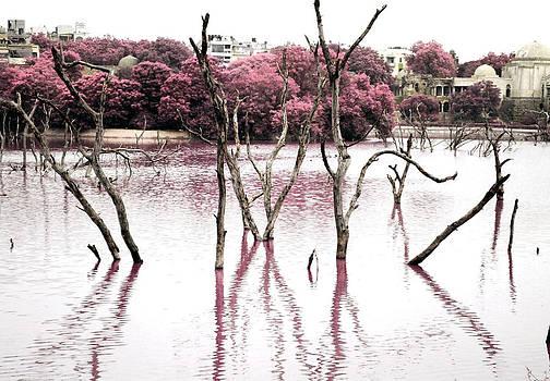 Sumit Mehndiratta - swamp 3